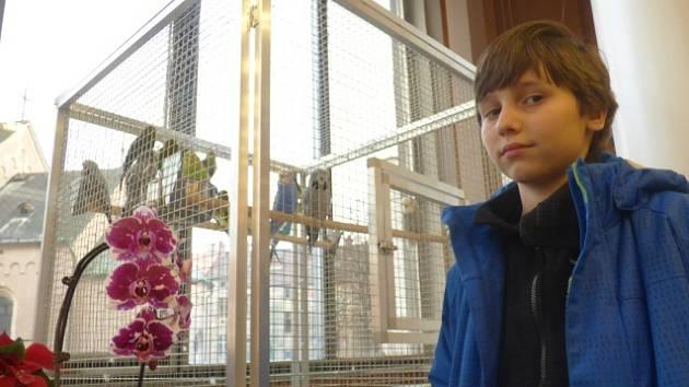 V neděli v Metropolu skončil již 17. ročník tradiční výstavy orchidejí.