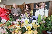Orchidejím už se Karel Willinger věnuje padesát let. Teď se o svou největší vášeň dělí i s ostatními.