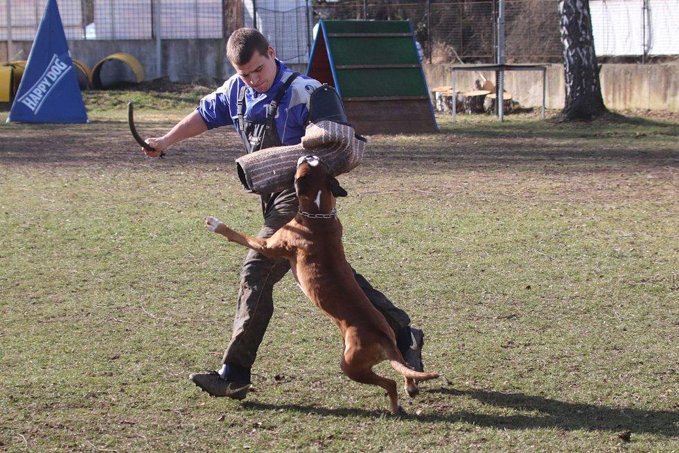 Únorový závod prověřil psy v obraně a poslušnosti.