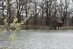 Přírodní rezervace leží na severozápadním okraji Českých Budějovic a má rozlohu 245,8 ha. Zahrnuje čtyři rybníky, mokřady a louky. Vyznačuje se bohatou a unikátní faunou i flórou.