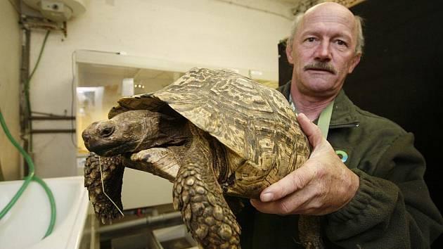 Zoolog Ivan Kubát se želvou, která se již těší do nové expozice.