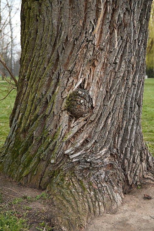 Duch stromový 23 - to vypadá, že stromy nerodí jen ovoce