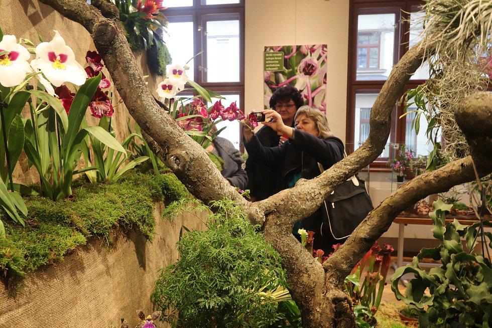 Výstava orchidejí v Jihočeském muzeu.