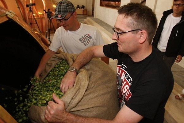 Na chmelnici vBlšanech uŽatce vpátek ráno sklidili 800kilogramů čerstvého chmele pro Budějovický Budvar. Za pár hodin se zněj začalo vařit speciální prémiové pivo.