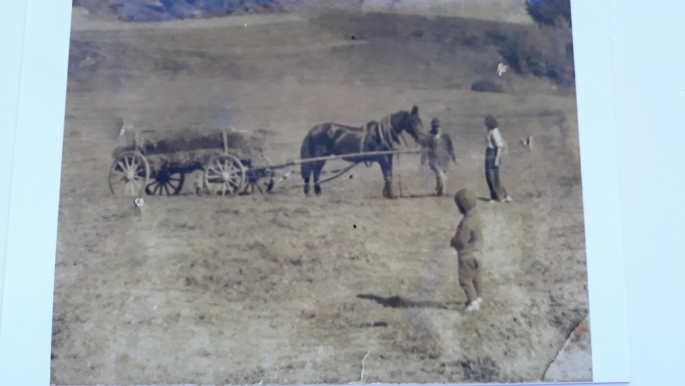 Fotografie z 30. let jsou krásným důkazem o tehdy nezalesněném údolí Vltavy, kde sedláciz Jamného a Zahorčic sklízeli na svazích seno.