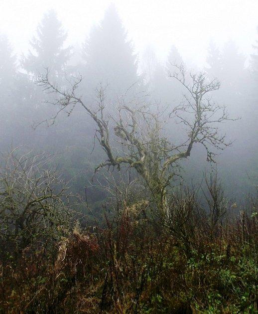 Mlha a starý strom.