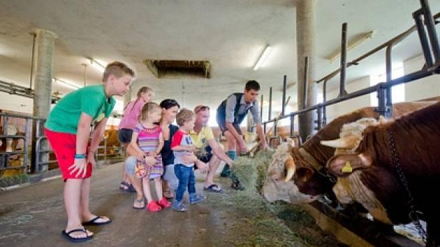 ... a dětičky uvidí i krávu!