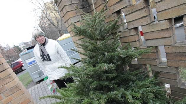 U kontejnerů v Českých Budějovicích se začínají objevovat vánoční stromky.