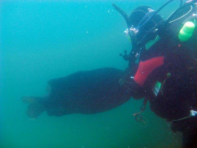 Potápěč zachránil kapra.