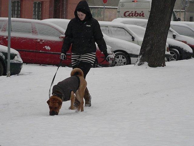 Sníh v Českých Budějovicích 27. ledna 2014.