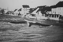 Racek nad Otavou obletěl v roce 1939 doslova celý svět a František Petřík získal za snímek cenu v New Yorku.