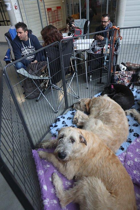 Mezinárodní dvoudenní výstava psů na českobudějovickém Výstavišti proběhla o tomto víkendu.