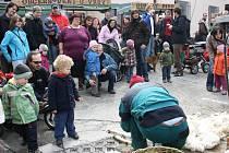 První letošní farmářský trh U Vrby přilákal řadu návštěvníků, především mladých rodin. Krom nákupu se jim nabízela zajímavá podívaná v podobě ukázky stříhání ovcí, setkání s řadou zvířat či tvůrčí dílna pro děti.