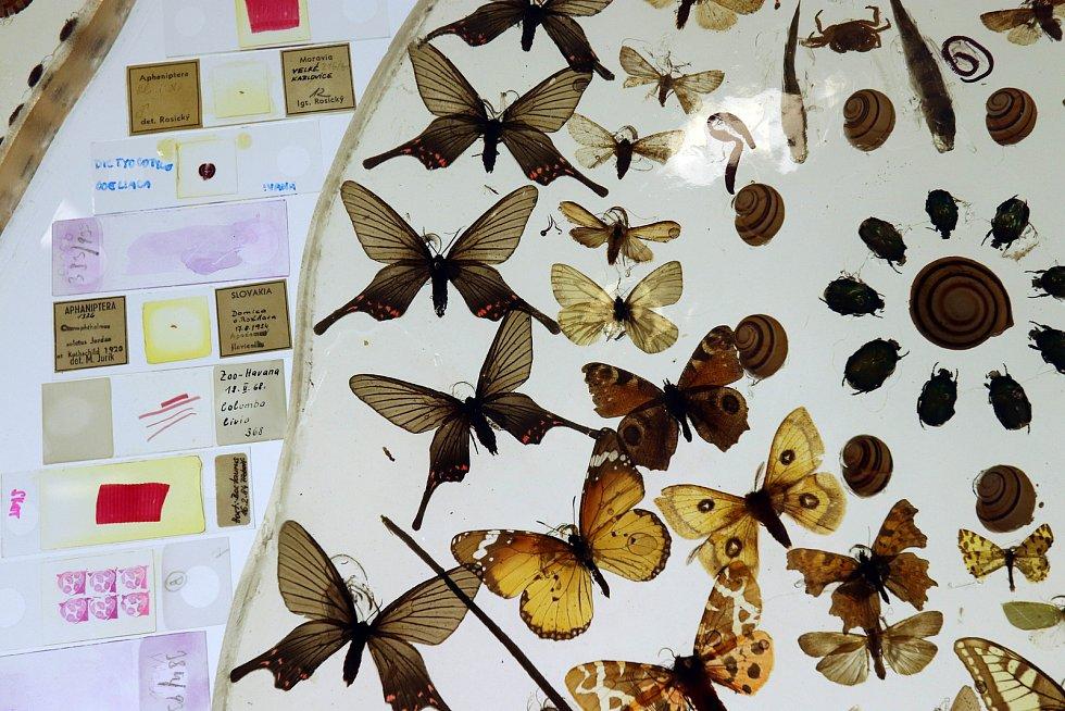 Hmyzí obraz v českobudějovickém Biologickém centru
