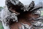 Duch stromový 22 - černá díra
