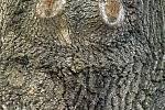 Duch stromový 1