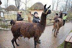 Velikonoce v hlubocké zoo si v sobotu užily tři tisíce lidí.