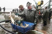 Výlov rybníka Horusický 2019,třebonští rybáři chtějí během několikadenního výlovu vylovit téměř čtyři sta tun ryb převážně kaprů,ale i štik,candátů,a tolstolobiků