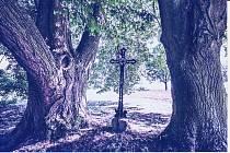 Lípy u Doubravky byly jako vítězné stromy z Jihočeského kraje nominovány v roce 2014 do finále ankety Strom roku. Kříž u lip nechala podle místního podání postavit rodina Landova.