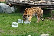 Hurá do vody. Zvířata hlubocké zoo si v těchto dnech lebedí ve vodě nebo si hoví ve stínu.