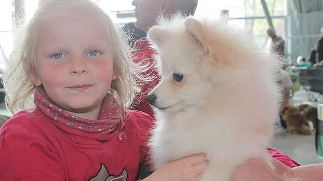 Výstava psů na českobudějovickém výstavišti.