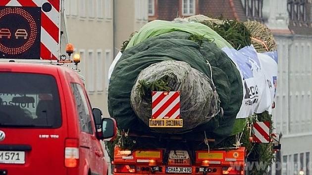 Strom z pomezí na cestě do Říma.