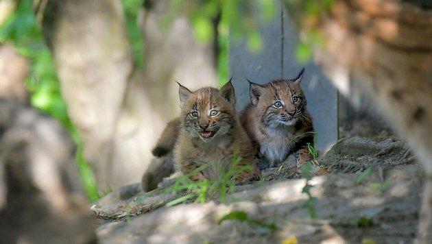 Koťátka…