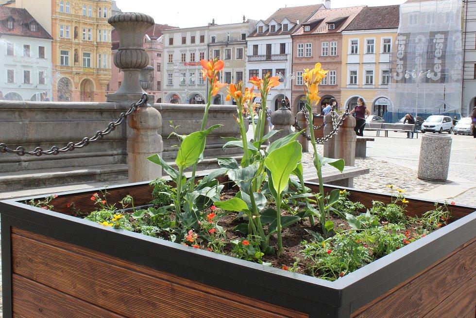 Květináče zdobí okolí kašny na budějovickém náměstí.