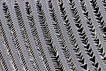 Vědci vystavují v budějovické Galerii Nahoře. Na snímku filtrační aparát drobných korýšů perlooček, které s jeho pomocí dokážou profiltrovat obrovské množství vody, z níž získávají potravu (řasy).
