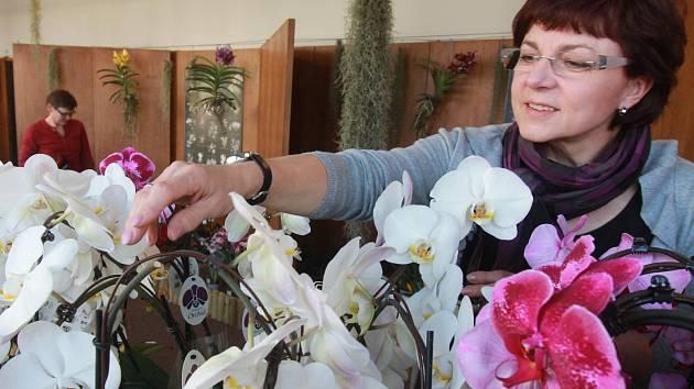 Výstava orchidejí v českobudějovickém Metropolu.