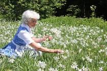 Když krásné kytky rostou ve velkém...