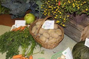 Na podzim pořádají tradičně výstavu výpěstků zahrádkáři v Nových Hodějovicích u Českých Budějovic.