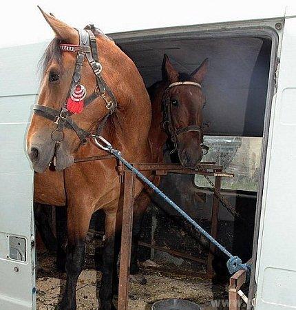 Jak se asi koně cítili vtransportéru?!