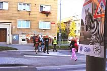 Akce se zebrou začala v pondělí v krajském městě.