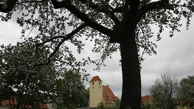 V gotické tvrzi Žumberk na Novohradsku chystají na letní sezonu novou expozici Rožmberkové a rybníkářství v jižních Čechách a Waldviertlu. Návštěvníkům přiblíží historii rybníkářství v oblasti Třeboně a Nových Hradů.