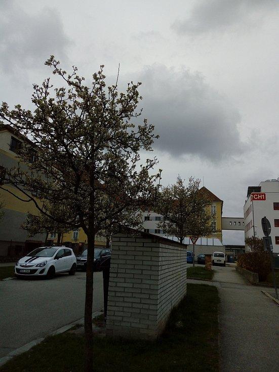 Rozkvetlé České Budějovice