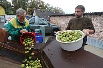 Začala sezona výkupu padaných jablek v Mladém na náměstí Maxe Švabinského.
