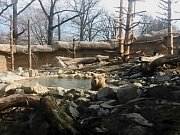 Medvěd Altaj ze Zoo Ohrada si užíval jarní březnové počasí. Hned ráno skočil do bazénku ve svém výběhu.