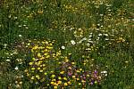 Květnaté pásy v Českých Budějovicích pomáhají hmyzu. Samotářská včela z rodu hedvábnice.