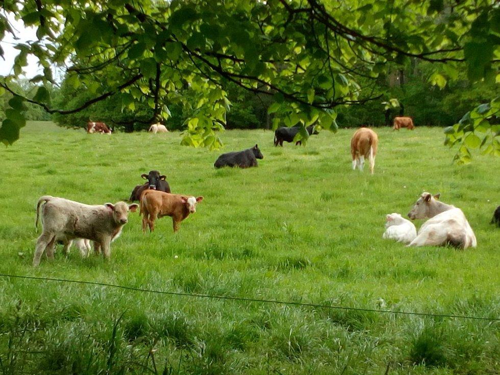 S jarem se na pastvinách i u rybníků na Českobudějovicku tradičně objevila mláďata.