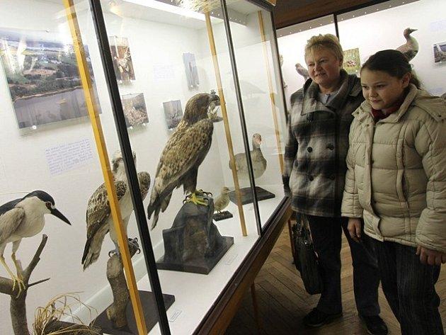 Expozice přírody v Jihočeském muzeu.