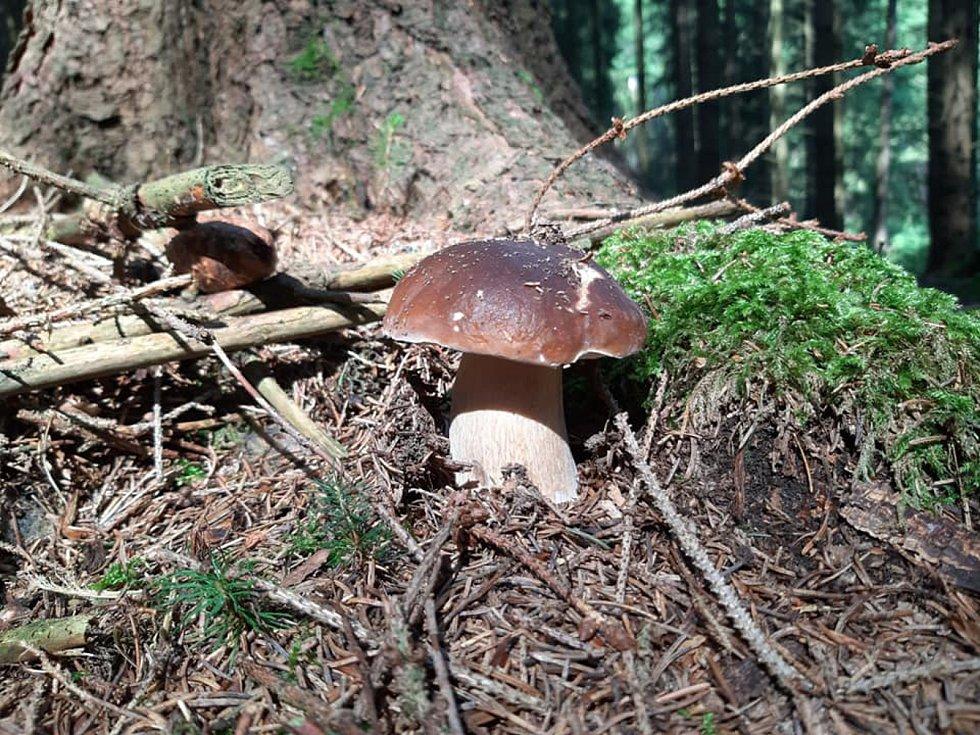 Eva Cieslarová si vyrazila se psem, odnesla si z lesa batoh plný hub.