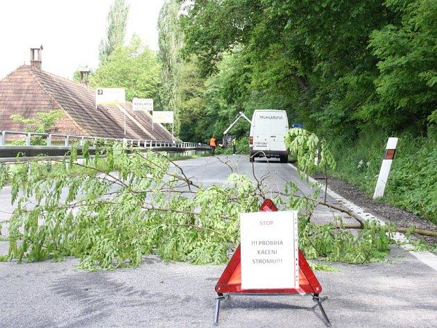 Kácení stromů u Hluboké nad Vltavou.