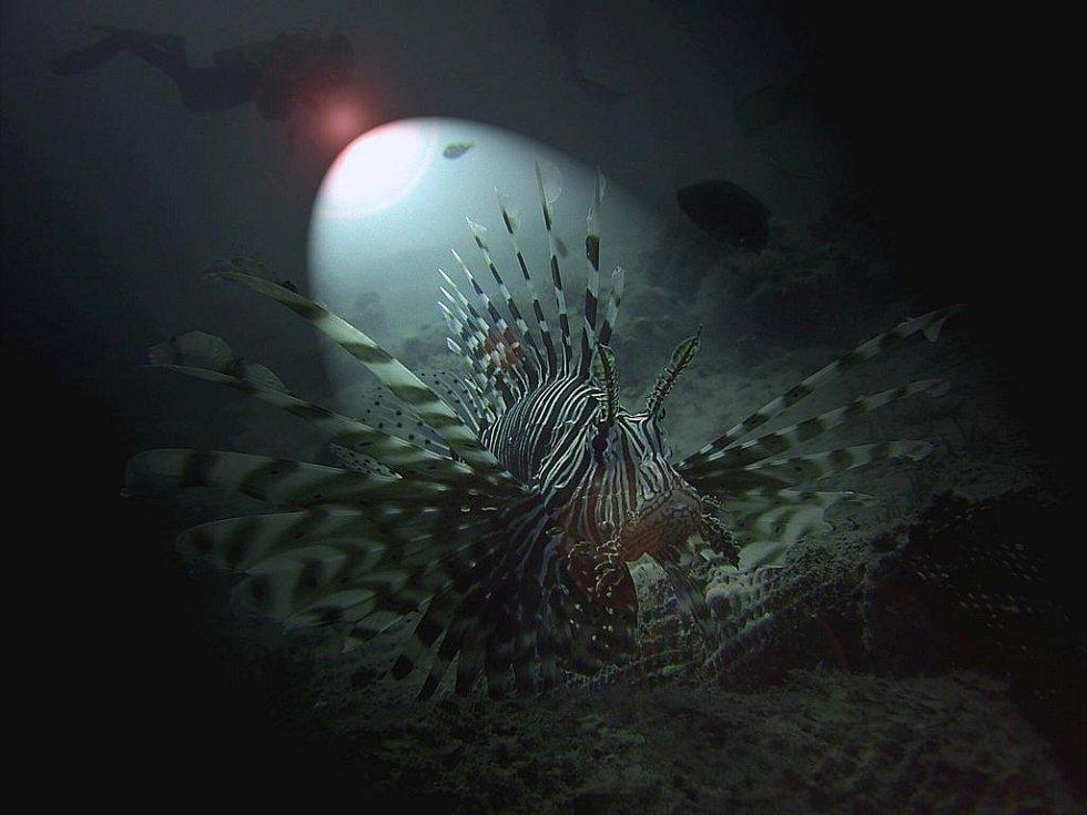 Potapěčka a zooložka Martina Balzarová vystavuje od úterý v budějovické Galerii Nahoře své snímky s názvem Tváře moře.