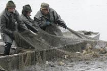 Sítě a kádě plné ryb patří na jihu Čech neodmyslitelně ke každému podzimu.