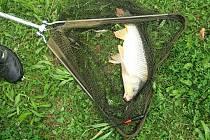 Rybářská soutěž Zahročická šupina