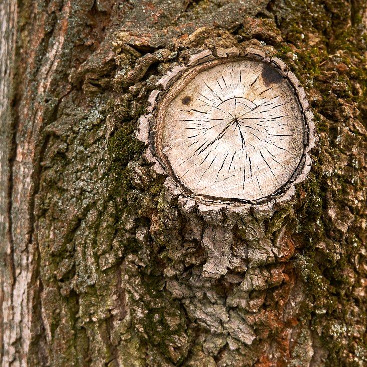 Duch stromového času