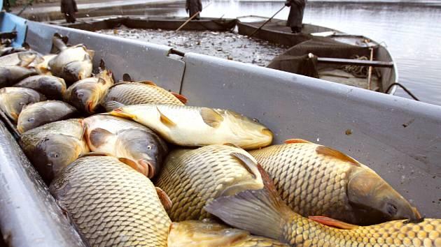 Práce rybářů je především vidět na jařě a na podzim, když se loví rybníky. Ale rybáři mají plno práce po celý rok. Na snímku je výlov rybníka Ponědraž.