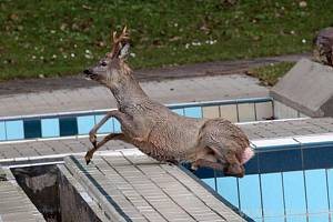 Z bazénu nakonec vyskočil sám...