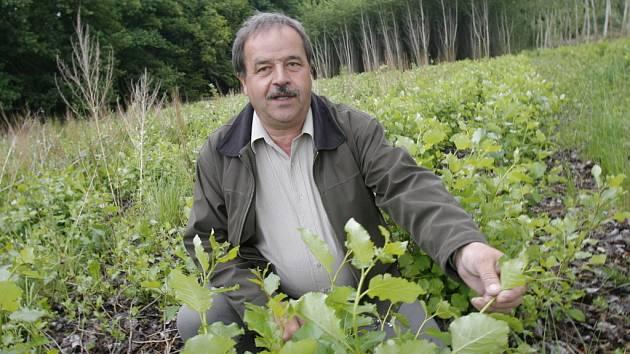 Starosta Všemyslic Jan Čihovský ukazuje na plantáži rychlerostoucí kanadské topoly, které může obec používat nejen pro vlastní ekologické vytápění, ale také prodávat, a tím úspěšně plnit svou obecní pokladnu.